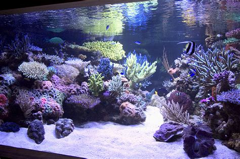 Saltwater Aquarium Aquascape by Reef Aquarium Aquascape Designs Manly Fish Beat Up