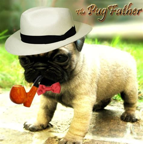 pug child meme 17 best images about cutiest funniest dogs in the world pugs on
