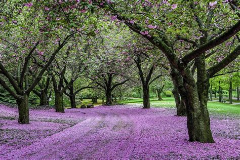 Botanical Garden In Nyc The 15 Best Botanical Gardens In New York Proflowers