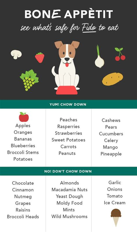what fruits and vegetables can dogs eat can dogs eat apples experts say quot sure quot care community