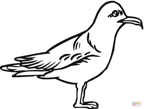 Seagull Outline Clipart Best Princess Color In Pages Free Coloring Sheets