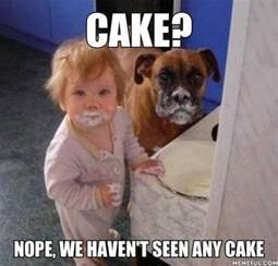 Kids Birthday Meme - dog birthday cake meme funny image