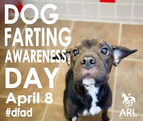 dog farting awareness day april  thatmuttcom