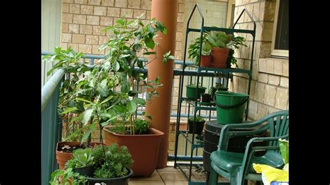 apartment food container gardening  started youtube
