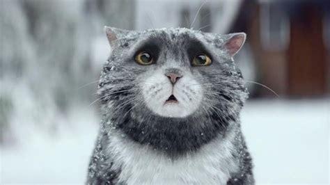 cat wallpaper john lewis cica aki majdnem elrontotta a kar 225 csonyt vide 243 l 243 tusz