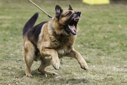 how to aggression out of dogs the trainer managing 5 key types of aggression and tips