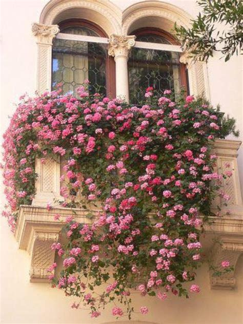 balcony flowers 365 best images about gorgeous geraniums on pinterest