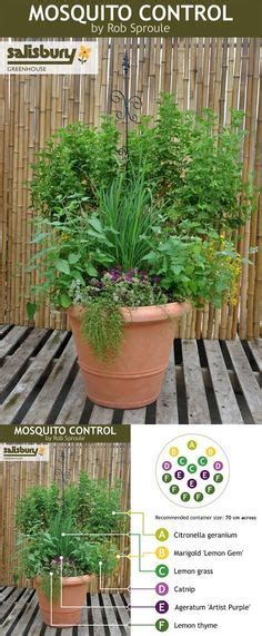How To Keep Mosquitoes Away From Front Door 1000 Ideas About Mosquito Repelling Plants On Mosquito Plants Plants In Pots And