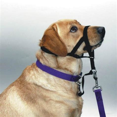 no pull harness for dogs halti no pull collar harness for dogs your to walk properly ebay