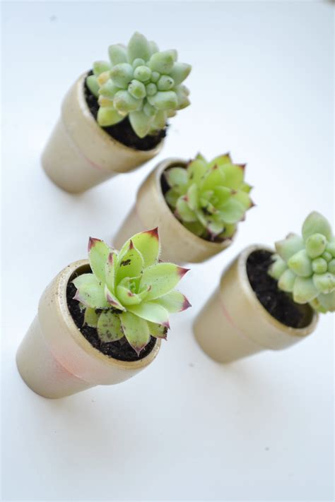 mini succulent planters all things pink and pretty diy mini succulent planters