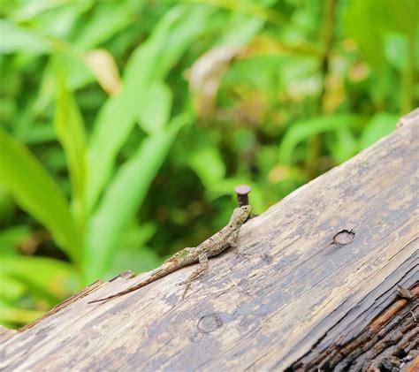 wandlen chrom el yunque rainforest 1310 foto s 402 reviews