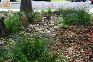 dry creek bed landscaping ideas car interior design