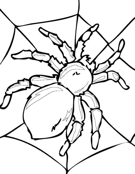 small spider coloring page insecten kleurplaten spin web