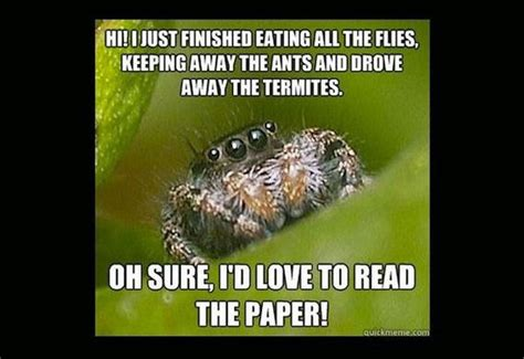 Meme Spider - cute spider meme