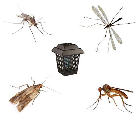 coleotteri volanti trituratori insetti e feedback sulla loro applicazione