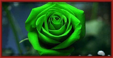 imagenes en 3d rosas las mejores fotos de rosas para compartir imagenes de rosa