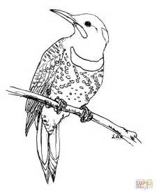 yellowhammer coloring page northern flicker coloring page free printable coloring pages