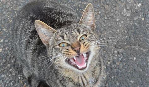 wann werden katzen geboren katzen st 228 ndiges miauen kann alarmzeichen sein