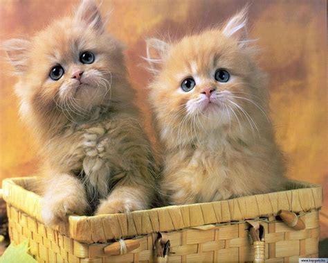 cat pictures cats cats wallpaper 22065937 fanpop
