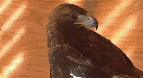 new mexico bird of prey rescue center threatened by lack