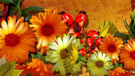 autumn flower fall flowers wallpapers wallpaper cave