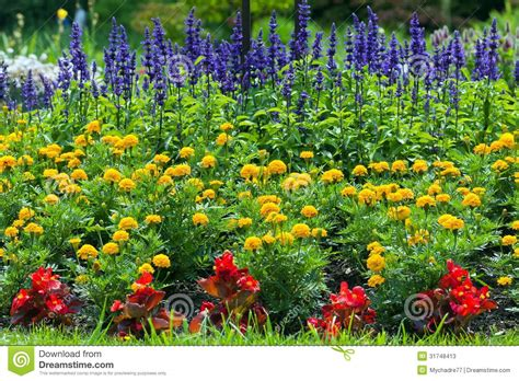garden flowers a z colorful blooming flower garden stock image image 31748413