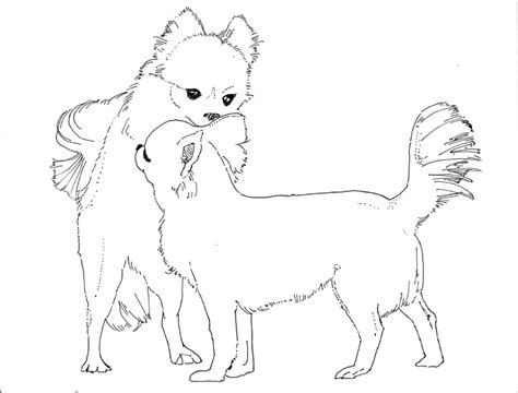 coloring pages chihuahua dogs chihuahua coloring pages
