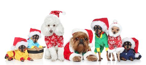 merry christmas  shampooches shampooches dog