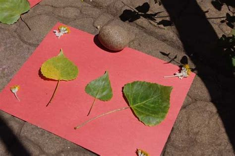 How To Make Sun Print Paper - 121 best images about sun safety ideas on