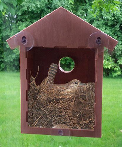 decorative bird house beauty and interest for you and birds
