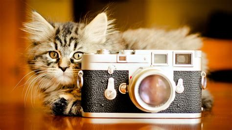 cat and wallpaper cat and hd wallpaper animals wallpapers