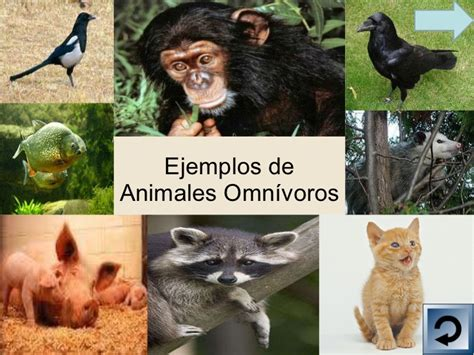 imagenes de animales carnivoros herbivoros y omnivoros los animales los carn 237 voros herb 237 voros y omnivoros