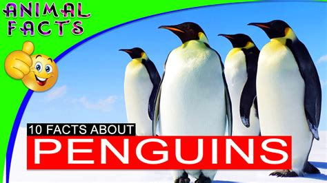 penguin facts for exciting facts about penguins facts about animals volume 18 books facts about penguins the best fact in 2018