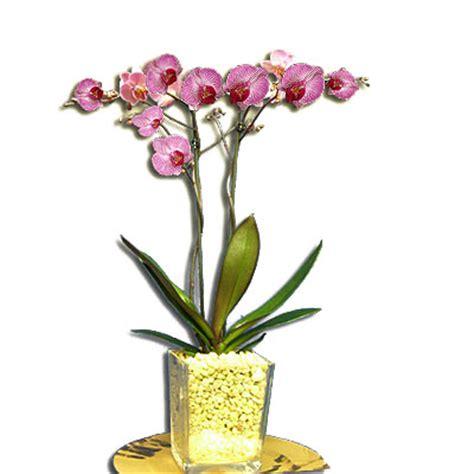 come si curano le orchidee in vaso piante orchidee piante di orchidee orchidee orchidee