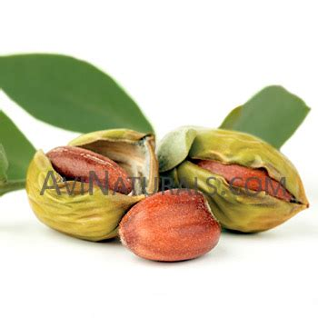 Organic Golden Jojoba organic golden jojoba carrier wholesale supplier in india