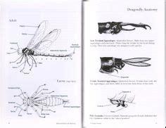 jaguar cycle diagram diagram of jaguar cycle web cycle diagram wiring