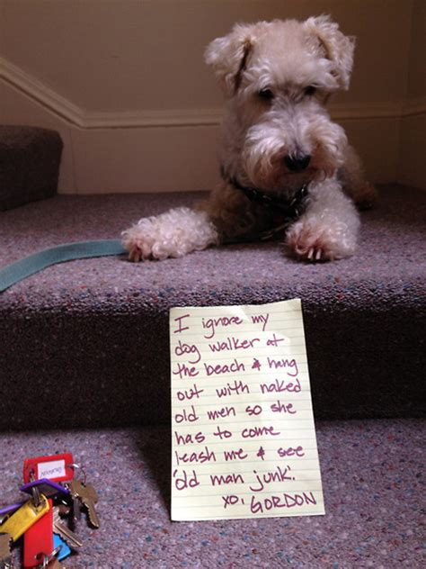 Dog Shaming Meme - 19 times a dog s act was worth the hilarious shaming sign