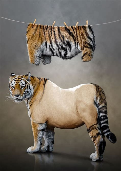 herding tigers be the leader that creative need books best 25 photo manipulation ideas on photo