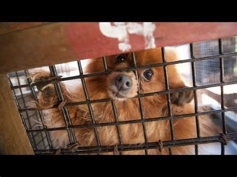 puppy mills in nc dogs rescued from herman and bonnie schindler s puppy m doovi