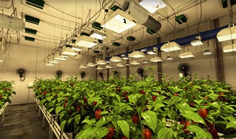 grow room supplies and equipment sunlight supply launches vr indoor gardening experience