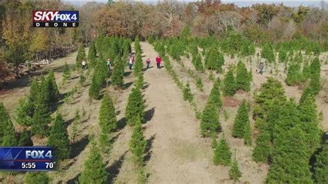 north texas christmas tree farm celebrates the season