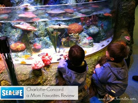 sea life charlotte concord aquarium now open mom