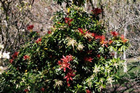 olinda rhododendron gardens