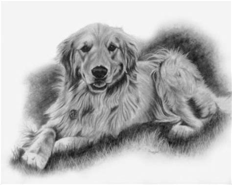 golden retriever sketch gladden the golden retriever sketch pet portrai all dogs juxtapost