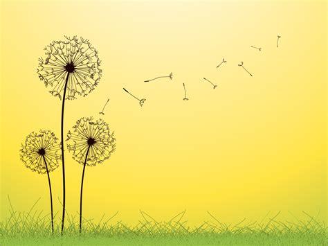 dandelion background dandelion fallen leaves backgrounds flowers green
