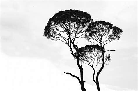 black  white photography pexels  stock