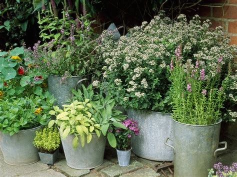 herb container gardens container herb garden container gardens