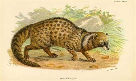 Weird Animals: 10 Really Bizarre Animals of Africa