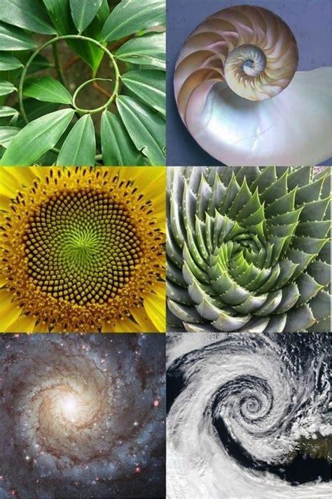 mathematical pattern in nature was uns die natur 252 ber heilige geometrie lehren kann