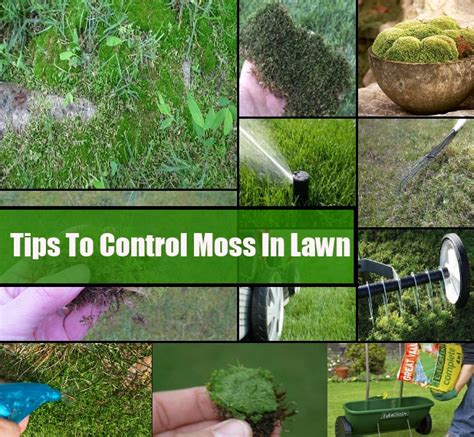 how to moss in lawn diycozyworld home